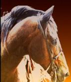 Benbrook Stables Horse Camp